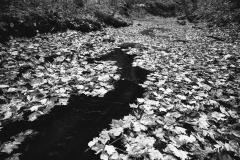 Black Rock Creek