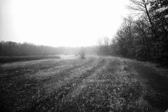 Blendon Fog 5x7 Film