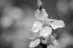 Rainy Spring Flower