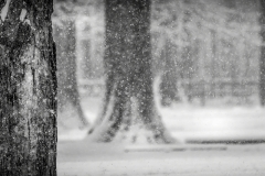Blendon Woods Snow