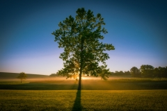 Alum Fog Sunrise