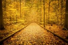 Autumn Engulf
