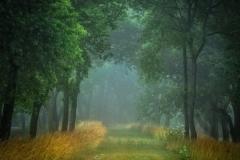 Pickaway Trail Fog