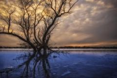 Hoover Lone Tree