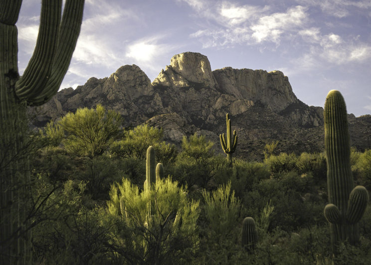 Catalina Desert Morning